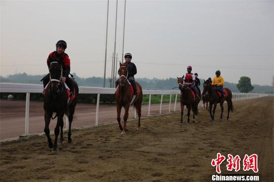 骑手与马匹亮相成都温江金马国际马术体育公园。 王爵 摄